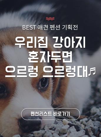 BEST 애견 펜션 기획전